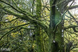 Bomen met mos