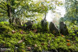 Stenen met mos