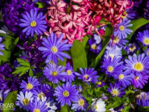 Roze hyacint gemixt met paarse gerbera