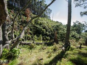Ongerepte natuur in Nieuw-Zeeland