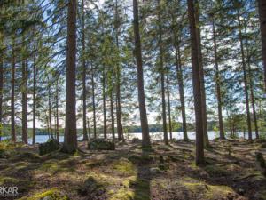 Zweedse natuur