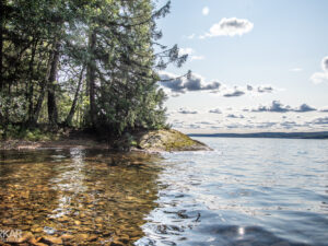 Bomen aan het water in Zweden